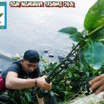 Begini Cara Pemerhati Lingkungan di Palopo Peringati Hari Mangrove