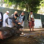 Pastikan Aman Dikonsumsi, DP3 Palopo Lakukan Pemeriksaan Daging Kurban