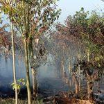 3 Hektar Kebun Warga Desa Dandang Luwu Utara Terbakar, Kerugian Ditaksir Ratusan Juta