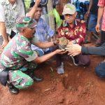 Kelengkeng Varietas Husler Ditanam Perdana di Luwu Timur
