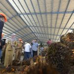 Pabrik Sawit Senilai Rp104 Miliar Hadir di Lutra