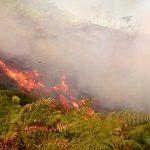 3,5 Hektar Lahan di Bukit Harapan Habis Dilahap si Jago Merah