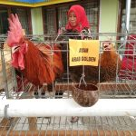 Yuk Belanja di Pameran Pasar Organik Dispertanak Palopo, Banyak Produk Dijual Murah