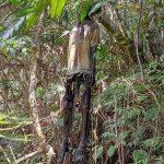 Sesosok Mayat Tergantung di Tengah Hutan Hebohkan Warga Desa Harapan